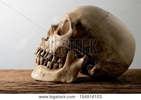 Still Life Photography With Human Skull On Wooden Table With Background.