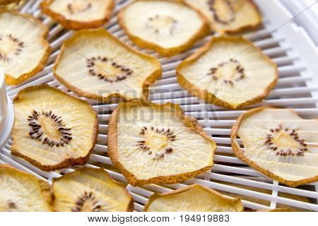 Dried golden kiwi fruit slices on a plastic food deyhydrator with shallow depth of field