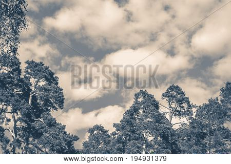 Old vintage photo. Sky clouds trees top summer forest copy space