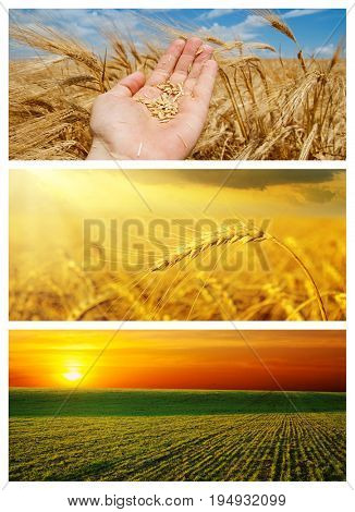 set of different agriculture field with crop