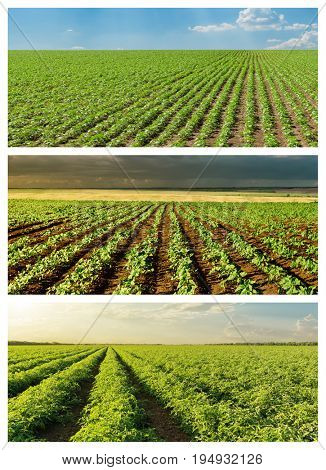 set of green agriculture fields in spring