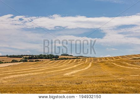 Beautiful yellow wheat field in vintage style autumnal nature countryside crop cultivation dry rye stems harvest season healthy nutrition concept. Agricultural field where harvest of cereals.