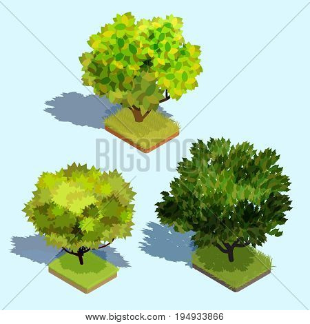 Set of 3D isometric trees with shadow and a green lawn underneath them. Collection of icons of street plants for creating your own design