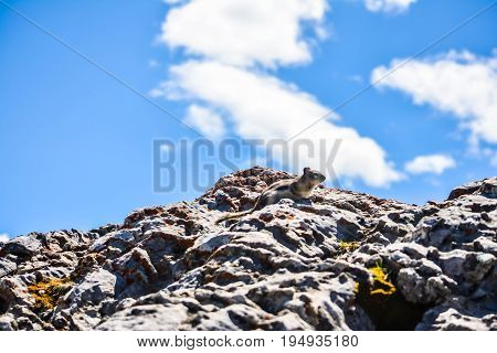 A Squirrel on Top of a Rock With Blue Sky in the Background