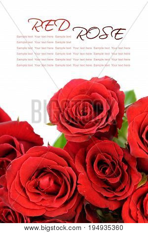 Red roses bouquet with sample text on white background.