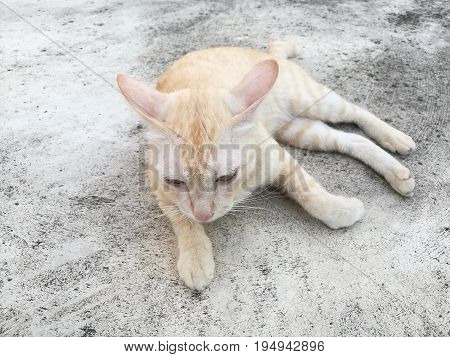 Close up of cute cat (light brown color) lying on concrete floor; staring (looking at) in front or at bottom of image