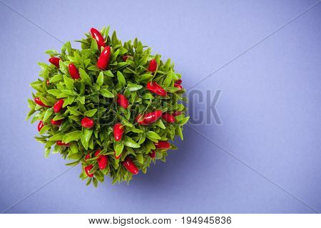 Pepper Plant Shot From Above On Blue Background.