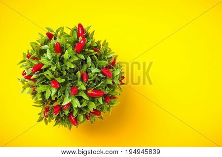 Pepper Plant Shot From Above On Yellow Background.