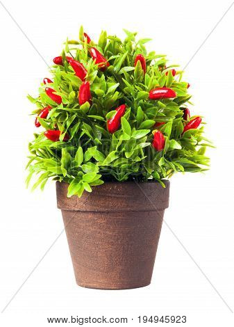Ornamental Pepper Plant Isolated On White.
