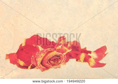 Withered roses and petals over vintage grungy background with space for text.