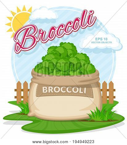 Vector illustration of eco products. Broccoli in burlap sack. Full sacks with fresh vegetables. Bag with harvest on the summer garden. Harvesting and food concept