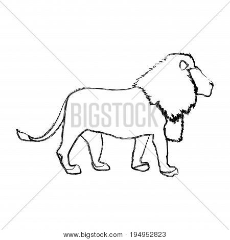 big lion african proud powerful nobility standing and fierce vector illustration