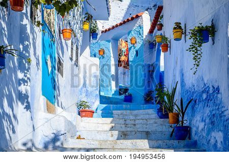 Colourful Flower Pots In Chefchaouen