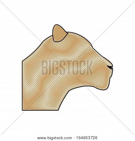 head female lion african animal beast vector illustration