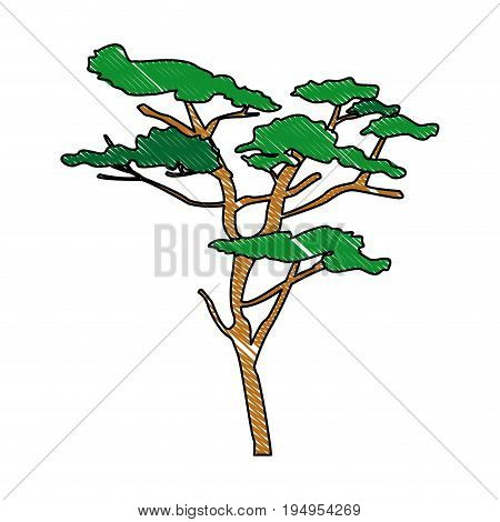 tree plant nature branch trunk foliage vector illustration