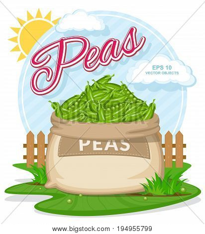 Vector illustration of eco products. Ripe Peas in burlap sack. Full sacks with fresh vegetables. Bag with harvest on the summer garden. Harvesting and food concept