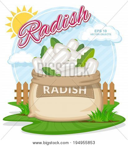 Vector illustration of eco products. Ripe White Radish in burlap sack. Full sacks with fresh vegetables. Bag with harvest on the summer garden. Harvesting and food concept