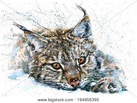Bobcat, lynx, Iberian lynx, art, watercolor, painting, animals, predator