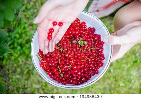 Bowl of red currants