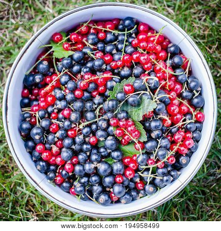 Bowl of red and black currants