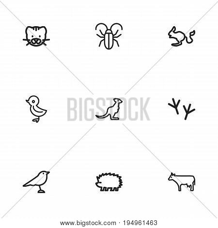 Set Of 9 Editable Animal Icons. Includes Symbols Such As Catbird, Bird Trace, Insect And More. Can Be Used For Web, Mobile, UI And Infographic Design.