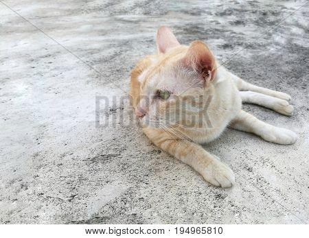 Cute light brown cat lying on cement floor; staring (looking) at something on the left side; copy space for text.
