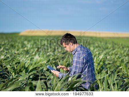 Farmer With Tablet In Corn Field