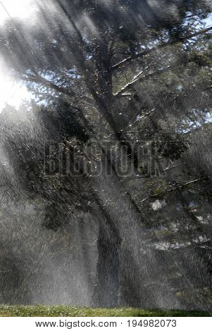 Rainstorm on trees with sunlight deluge major water