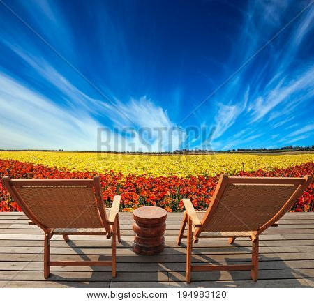 TWooden comfortable chairs next to the flower field. The concept of recreation and eco-tourism. Straw hat hanging on a deck chair
