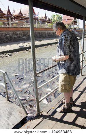 German Old Man People Feeding Food To Fish In Chao Phraya River