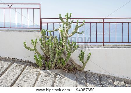 Green cactus growing on the pathway near the metal fence high in the mountains, sea and mountain landscape background