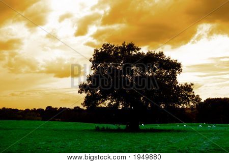 Open Field With Green Grass In Twilight Sureal Landscape