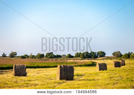 Hay stacks in the field in evening