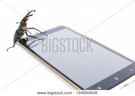 Beetle deer sits on a smartphone. White background. Isolated