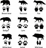 Animals and its tracks. Vector illustration poster
