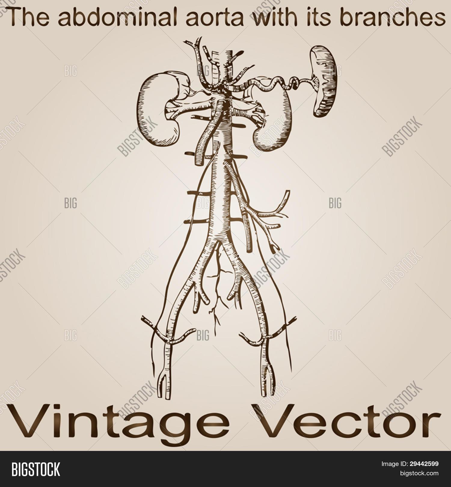 Vector y foto Vector Eps (prueba gratis) | Bigstock