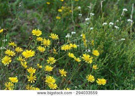 Wild Flowers In The Green Grass. Non Urban Scene