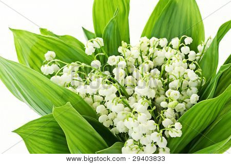 Lily of the Valley poster
