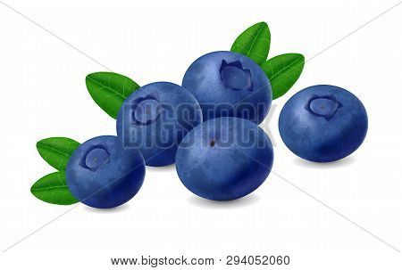Blueberry Isolated On White Background. Realistic Illustration