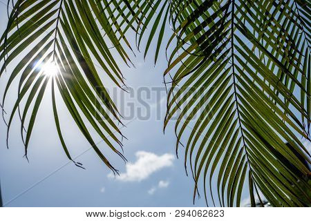 Palme In Der Sonne Palm In The Sun