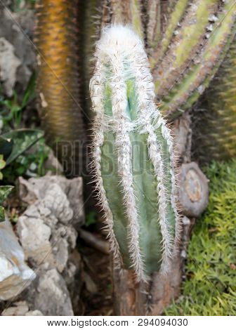 It Is A Details Of A Cactus, Blossom