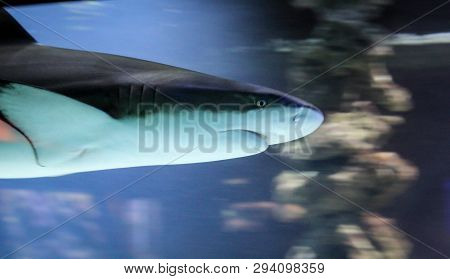 This Is A Portrait Of A Shark