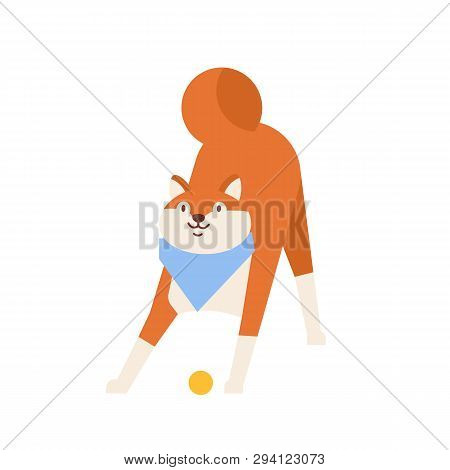 Frolic Akita Inu Playing With Ball. Playful Amusing Purebred Japanese Dog Wearing Neck Scarf Isolate