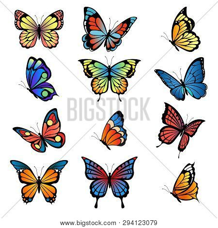 Colored Butterflies. Vector Pictures Of Butterflies Set. Butterfly Summer With Colored Pattern Wings