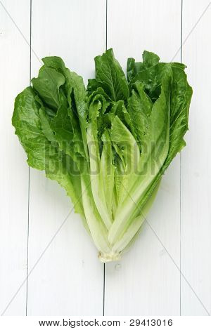 Cos Lettuce Isolated
