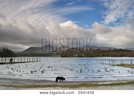 Collie By Derwentwater