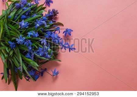 Spring Flower Landscape. Spring Blooming Spring Flowers On A Pink Background. Blue Flowers In Spring
