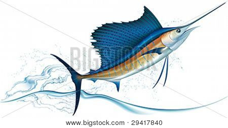 Sailfish jumping out of water. Realistic vector illustration.