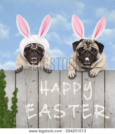 Two Cute Pug Puppy Dogs, Dressed Up As Easter Bunny, Hanging With Paws On Wooden Fence, With Blue Sk