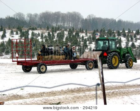 Catching A Ride On Christmas Tree Farm